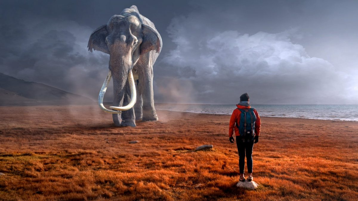 AT#48: How to Ride an Elephant in Digital Times?